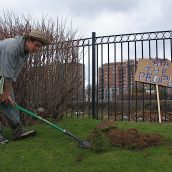 Beale digs a hole in the public space to make room for a garden.