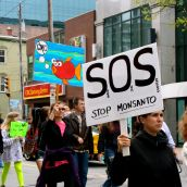 SOS: Save Our Seeds