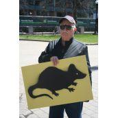 Rats!  Photo Robert Devet
