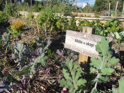 An urban garden has bloomed at the corner of Robie and Quinpool (Karen Raynard photo).