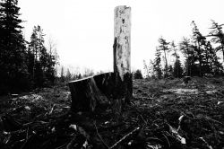 Boscobel Lands Clearcut Devastation - Poems and Picture