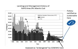 Eco-certification of Endangered Cod Population Undermines Credibility of the Marine Stewardship Council