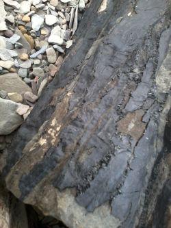 coal bark
